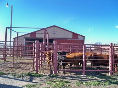 Haul in Cattle Facilities