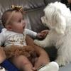 dog, canine, baby, animal clinic, paradise,