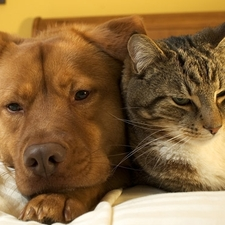 vaccinate, vilonia, genry, jenkins, vet, dog, cat