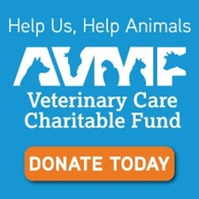 avmf care charity donate