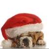 rochester, santa, veterinarian, churchville, dog