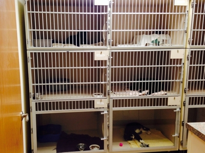 Cat Kennel Room