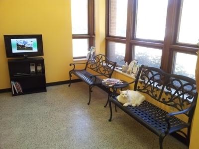 Pet friendly lobby