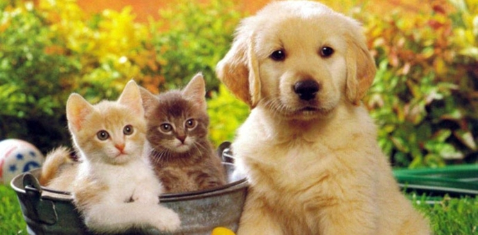 Uxbridge animal hospital veterinary