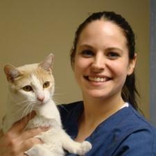 Great Veterinary Medicine
