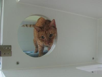 Cat Boarding Condos