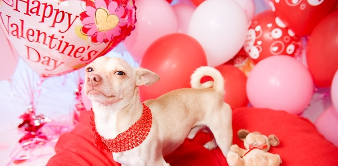 valentines day website