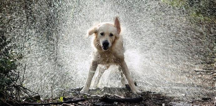 making it rain