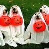 Ark Animal Hospital Howl-O-Ween Costume Contest