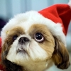 holiday pet care veterinary medicine san marcos
