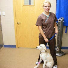 Chelsea, walking a dog back to the ward.