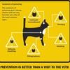 Feline Poison Prevention
