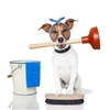 Spring Clean Your Dog