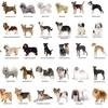 Dog Breeds, Dog Show