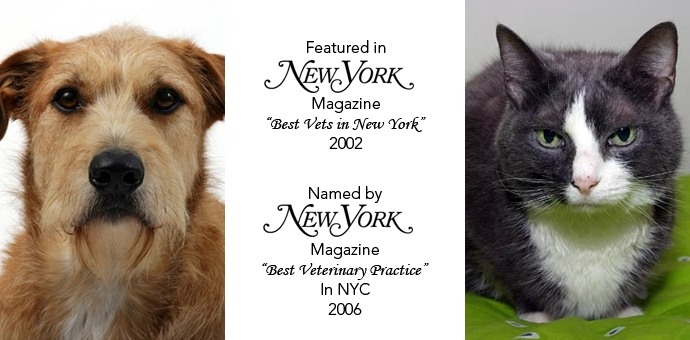 New York Magazine Accolades