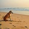 dog beach summer