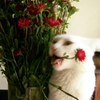 cat eating flowers