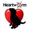 heartworm heart dog