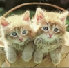 kittens basket