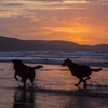 dogs beach sunset ocean water