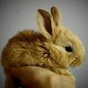 rabbit bunny baby easter