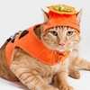cat costume halloween pumpkin