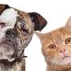 Pet Care Class
