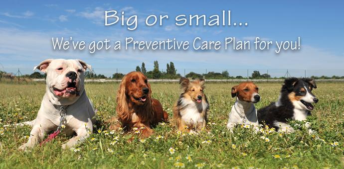 Petly Preventive Plans for Pets