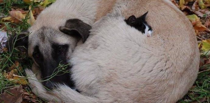 murrells inlet veterinarian dogs cats hospital