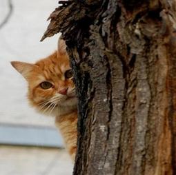 Feline Senior Care Packages Preventive Care Cats