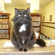 Hospital Cats Felines
