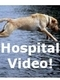 veterinary pets dog cat hospital surgery vaccines