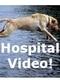 veterinary pets dog cat hospital surgery vaccines