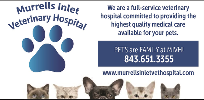 animal hospital dog cat veterinary spay neuter