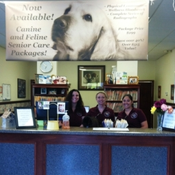 veterinary care pet care dogs cats veterinarians