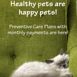 wellness plan preventive care plan dog cat vet