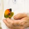 Mandel bird