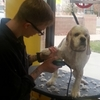 little dog being groomed
