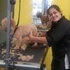 Groomer shaving a dog