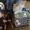 dog with gift basket
