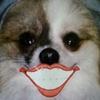 dog with big smile