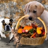 dogs with basket of fall colors