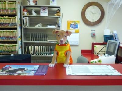 Puppy Receptionist
