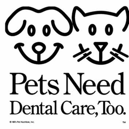 pets need dentals too