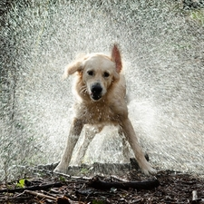 dog shaking off water