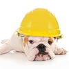 bulldog wearing hard hat