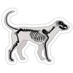dog skelaton