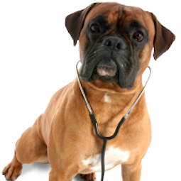 boxer dog doctor