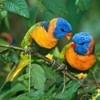 Birds, Bird, Avian