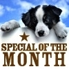 Puppy looking at Monthly Special sign